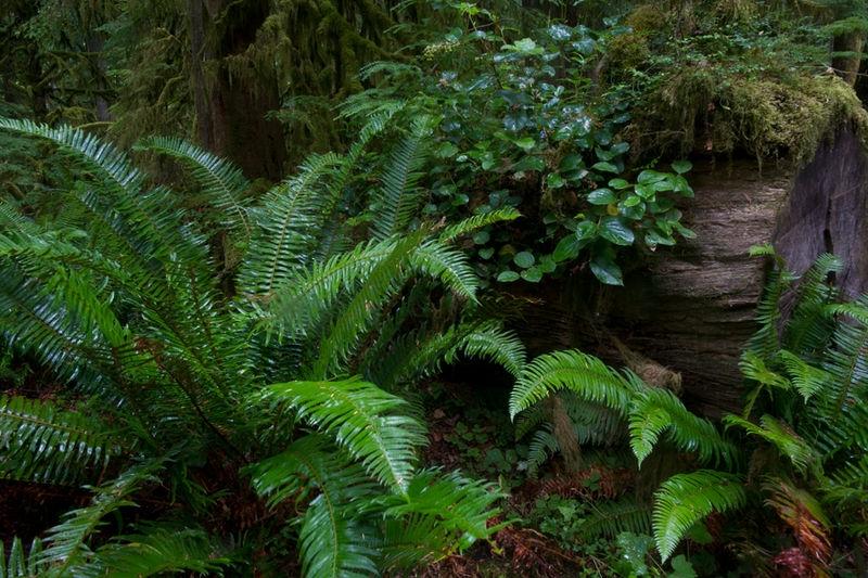 Marymere Falls Trail 3SA3980