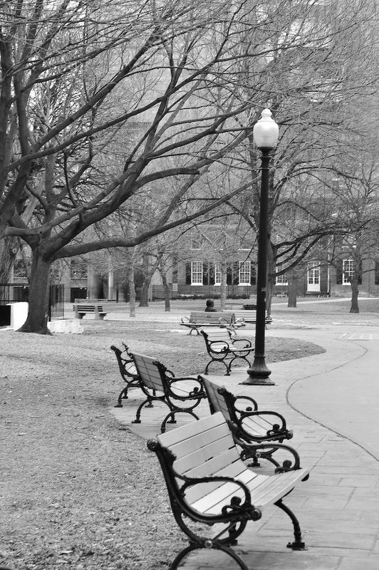 Benches at Grange Park