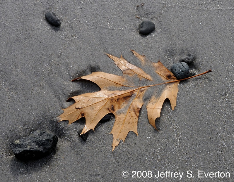 New England Beach in the Fall