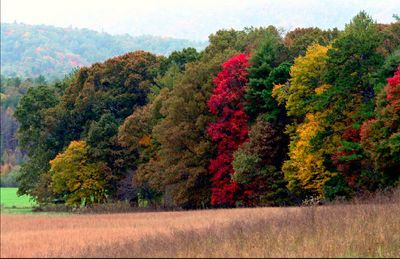 Leaves turning at Cades Cove