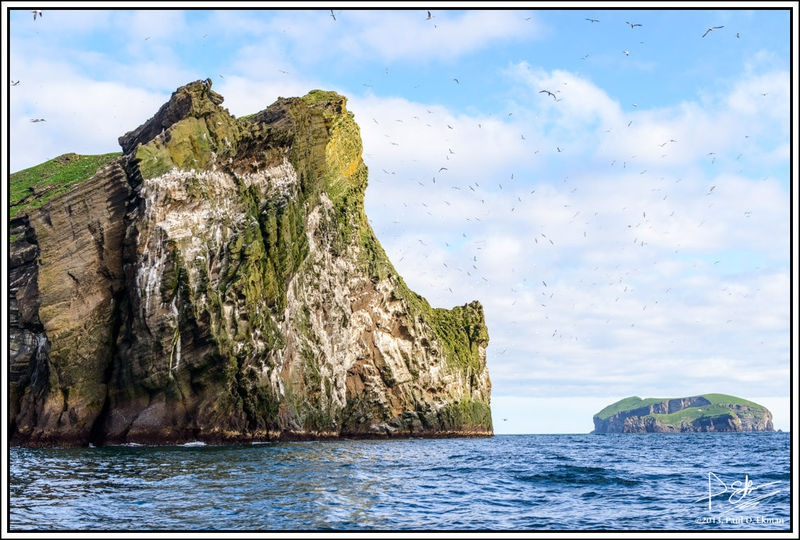 Westman Islands Boat Tour