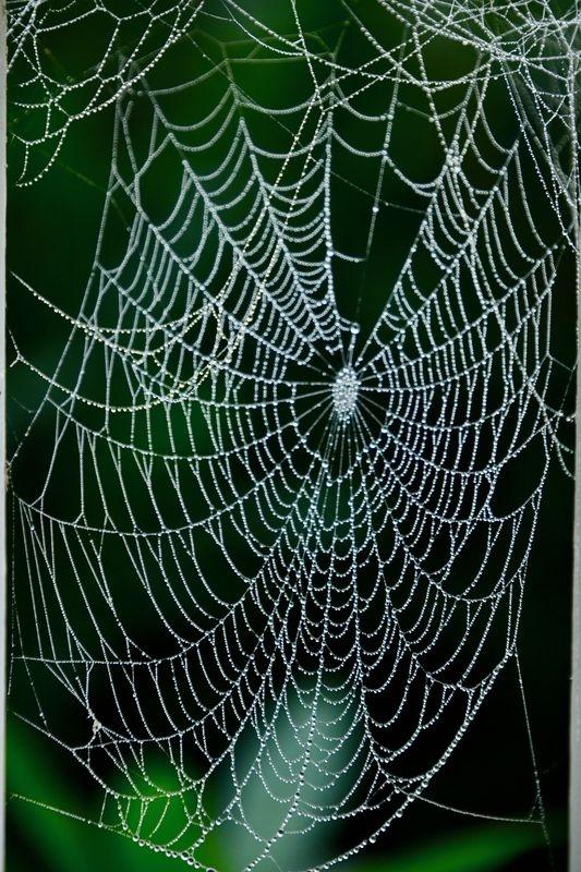 Rainy day spider web.