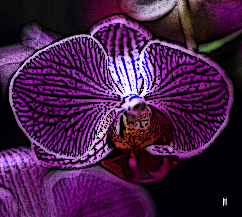 """Orchid """"woodcut"""""""