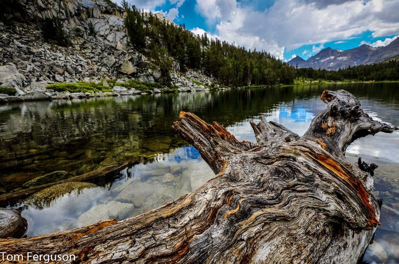 Gnarled Log In A Mountain Lake